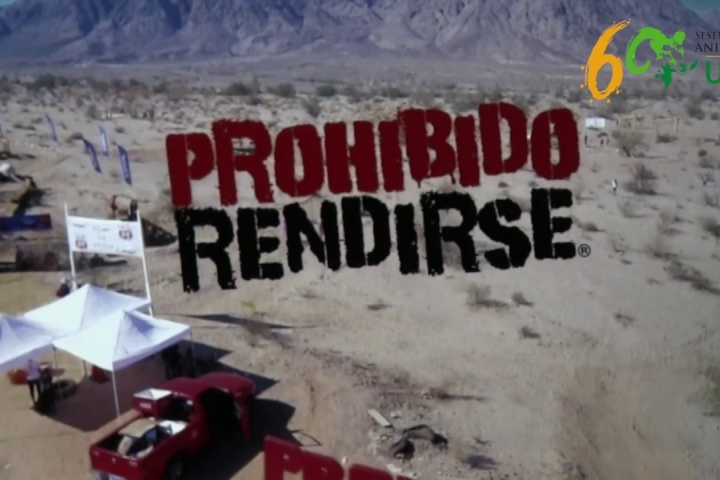 Embedded thumbnail for Agenda Prohibido Rendirse