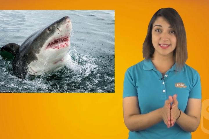 Embedded thumbnail for  Tiburones - Vitamina C